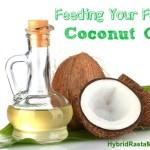 Feeding Your Family Coconut Oil: HybridRastaMama.com