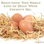 Extend the Shelf Life of Eggs With Coconut Oil: HybridRastaMama.com