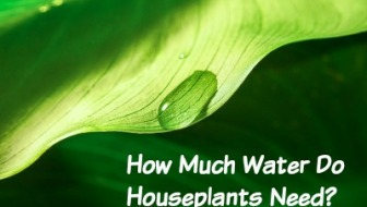How Much Water Do Houseplants Need